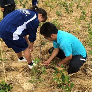 茨城県立高萩高等学校の皆様で植樹を行いました