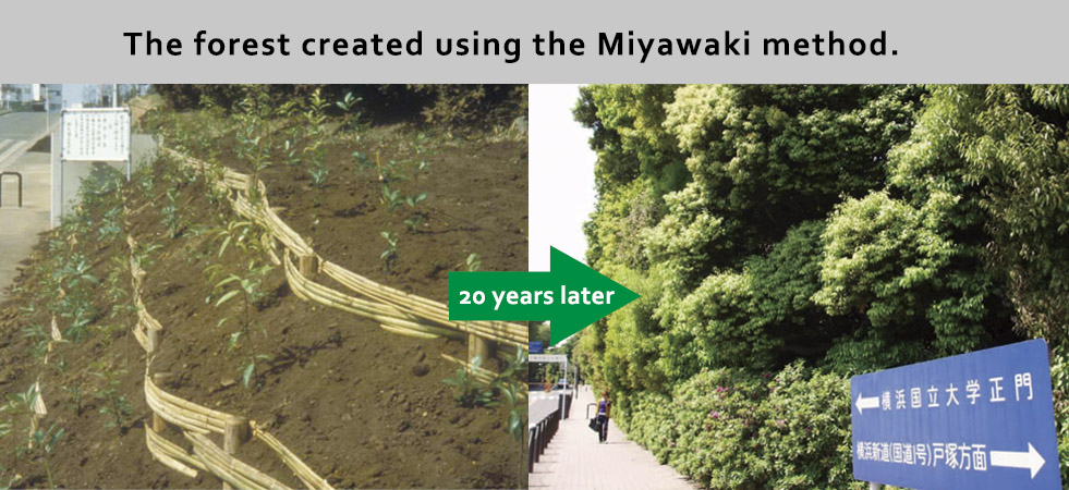 miyawaki_method