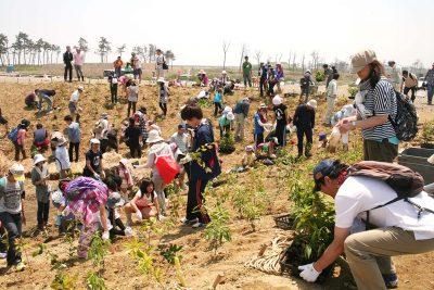 宮城県岩沼市千年希望の丘植樹祭2014