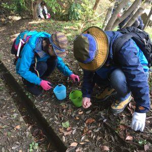 鎮守の森のプロジェクトどんぐり採種ツアー