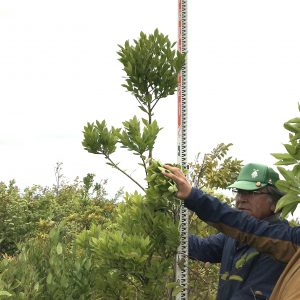「森の防潮堤」植樹地だより・2019年成長量調査