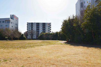 豊島区南長崎原っぱ公園の防火樹林帯/植樹から8年経過