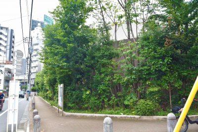 豊島清掃事務所/植樹から9年経過。いのちを守る樹林帯は1m幅あればつくれます。