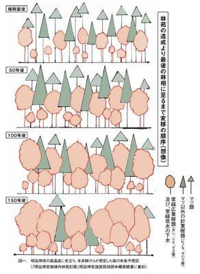 明治神宮の森造成に先立ち、本多静六らが想定した森の未来予想図